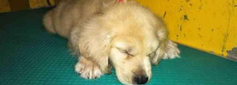 狗睡觉发抖是怎么回事 狗抽筋发抖怎么办