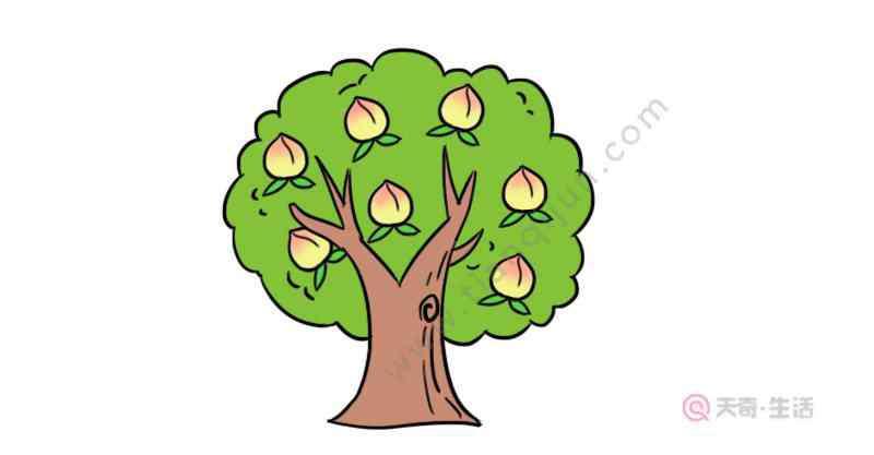 桃子怎么画 桃树简笔画 桃树怎么画好看