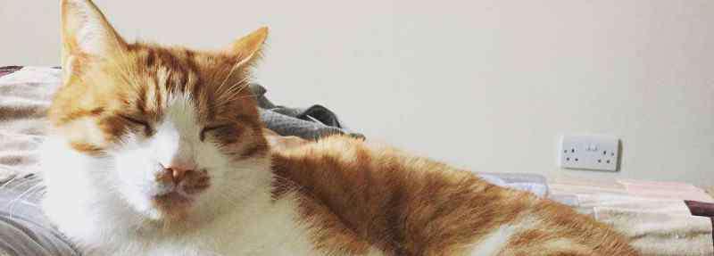 什么猫好养 什么猫好养,适合新手养的猫咪推荐
