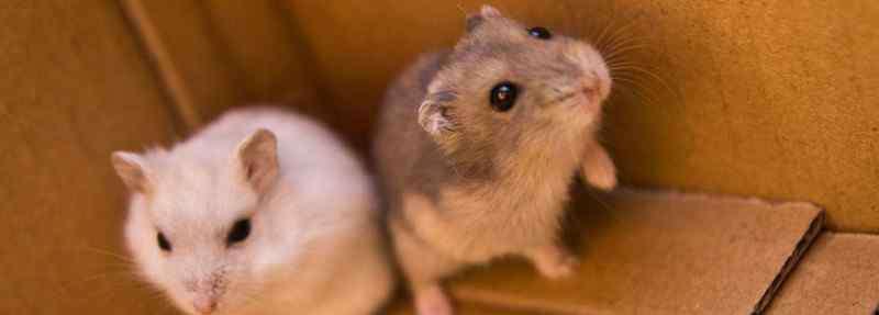 仓鼠过敏症状 仓鼠过敏症状