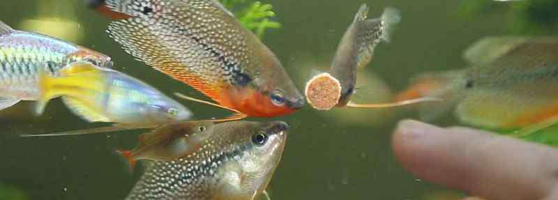自来水加盐能快速除氯 自来水爆氧多久能养鱼,自来水除氯要打多久氧