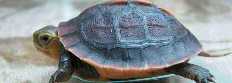 乌龟什么时候结束冬眠 乌龟什么时候开始冬眠