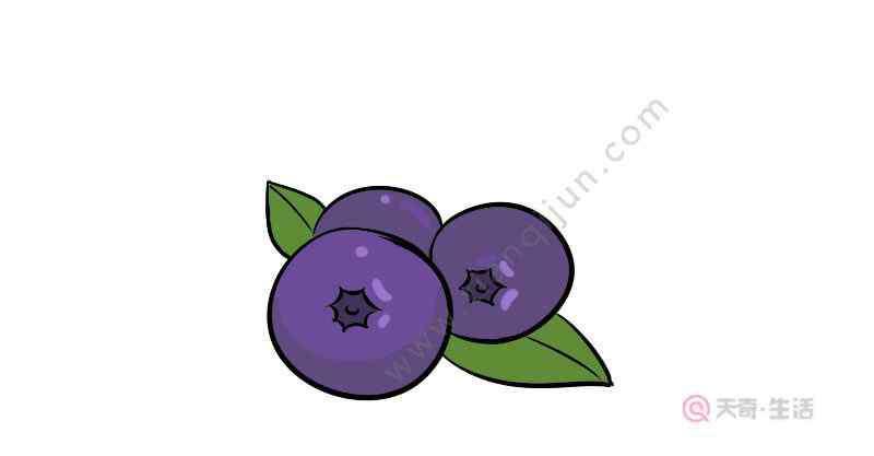 蓝莓简笔画 蓝莓简笔画步骤  蓝莓简笔画教程
