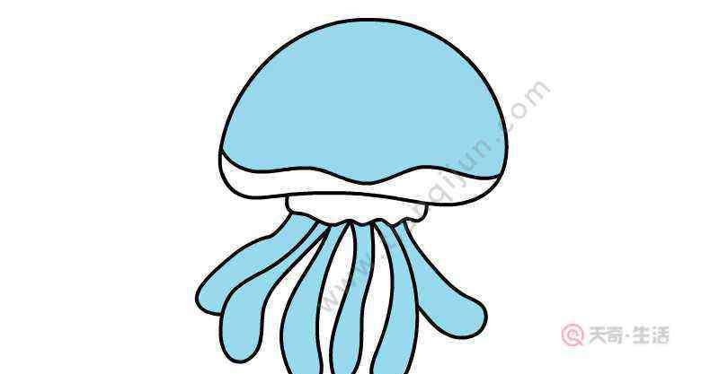 画水母 水母简笔画步骤  水母简笔画画法