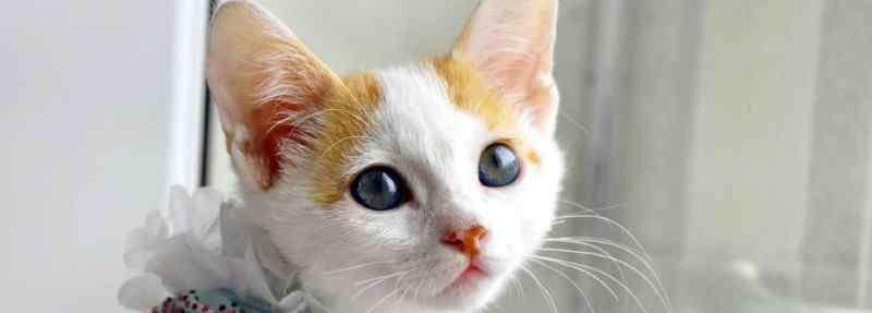 猫咪能喝酸奶吗 猫咪能喝酸奶吗