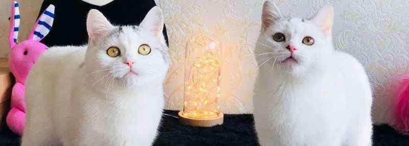 可以用手帮猫解决吗 可以用手帮母猫解决吗