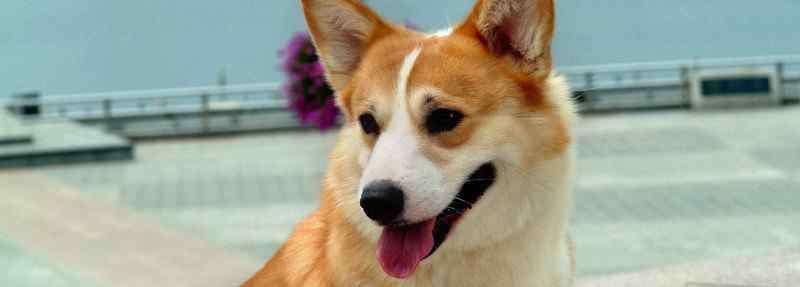 狗狗能吃虾吗 狗能吃虾吗
