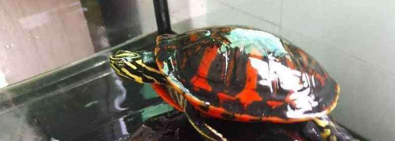 火焰龟怎么抓 火焰龟怎么抓
