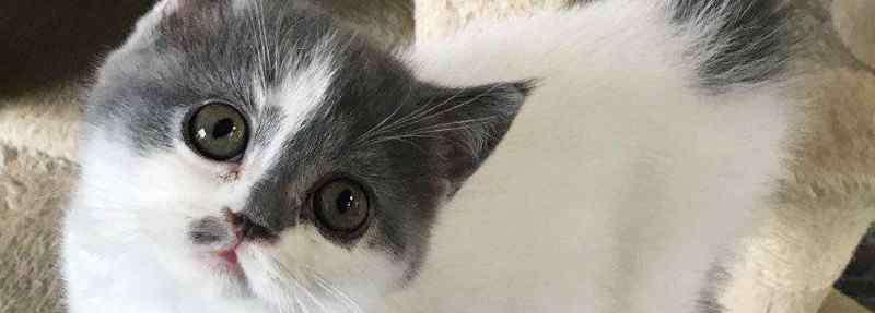 如何训练幼猫晚上不叫 如何训练幼猫晚上不叫