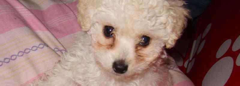 狗刨地什么意思 狗狗刨地板有什么征兆