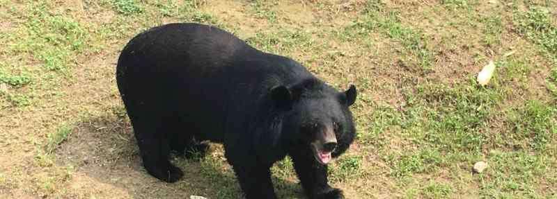 熊要冬眠吗 熊冬眠吗
