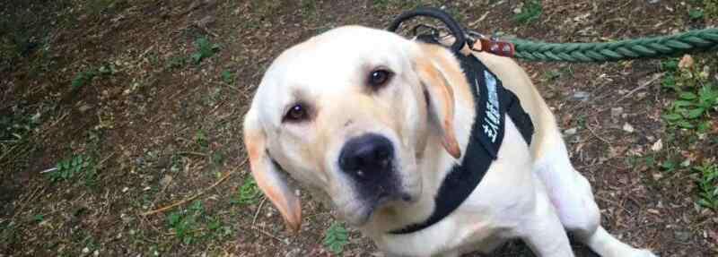 狗狗尿黄是什么原因 狗狗尿黄是什么原因