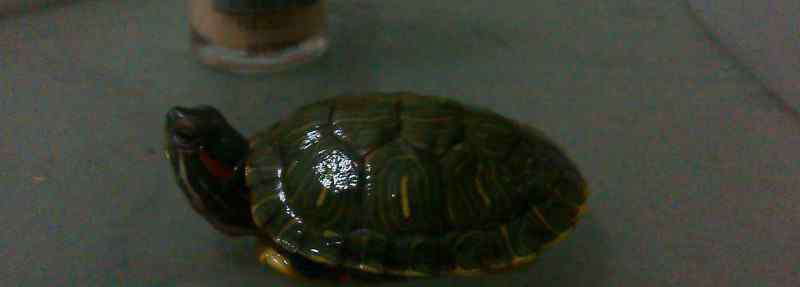 巴西龟冬眠 巴西龟冬眠时间