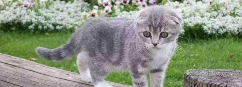 猫叫像小孩哭一样是怎么回事 猫晚上一直叫像小孩