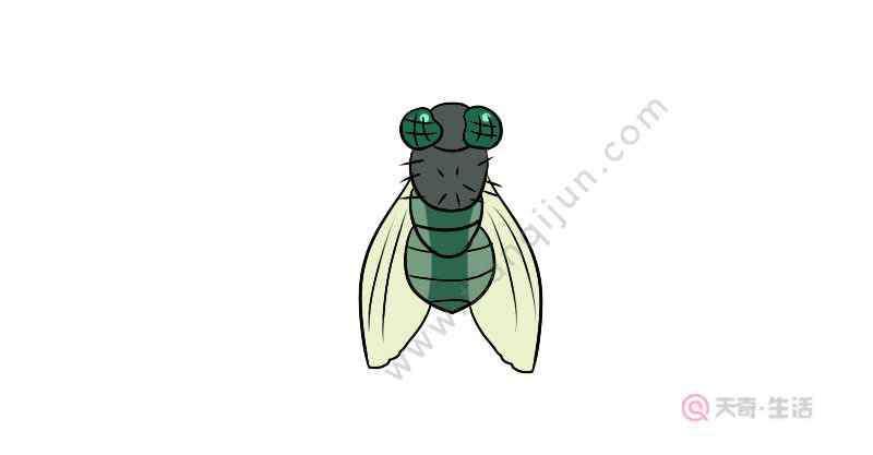 苍蝇的简笔画 苍蝇的简笔画教程  苍蝇的简笔画画法
