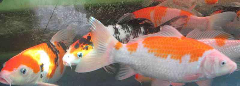 养观赏鱼的过滤方法 养观赏鱼的过滤方法