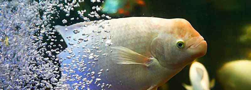 鱼身上有红斑像出血了怎么办 招财鱼身上有红斑怎么治