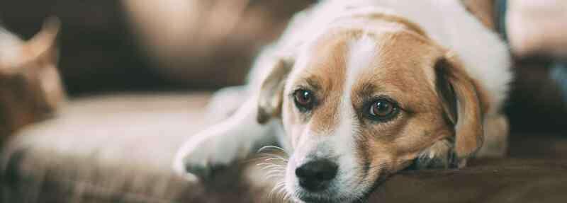 母狗来月经怎么办 母狗来月经怎么办
