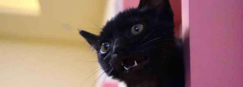 黑猫能随便养吗 养黑猫有什么忌讳