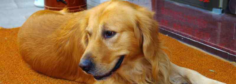 狗狗神经炎初期表现 狗狗神经炎初期表现,狗狗神经炎有哪些症状