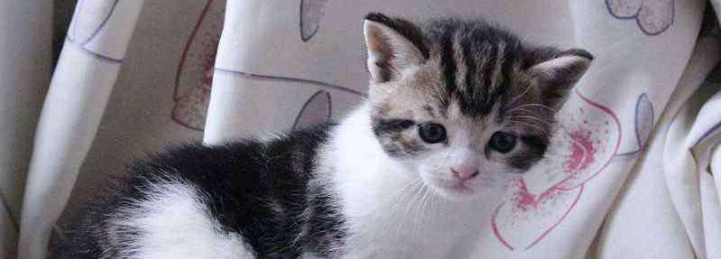 养2个月小猫攻略 养2个月小猫攻略