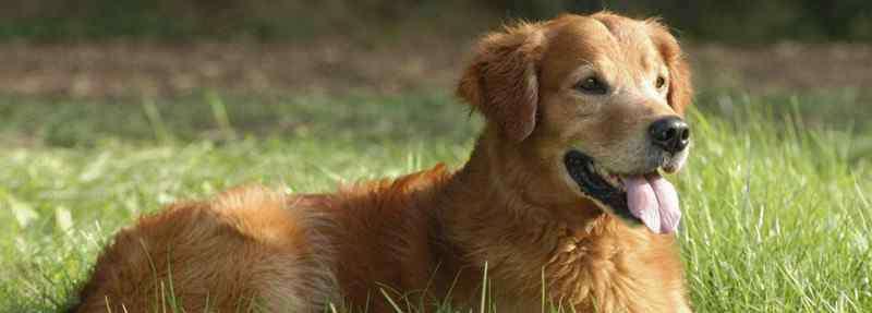 狗狗老是频繁的甩身体 狗狗老是甩头怎么回事