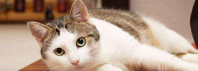 猫饿几天会饿死 猫咪饿几天会死