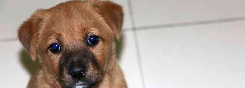 狗狗眼睛流泪怎么回事 狗狗眼睛睁不开流眼泪怎么回事,狗的眼睛睁不开什么原因