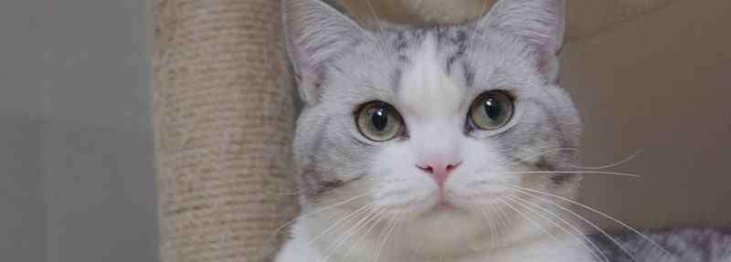猫呕吐什么原因 猫咪呕吐是怎么回事