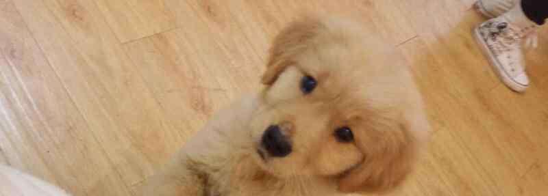 狗狗能吃面包吗 狗可以吃面包吗
