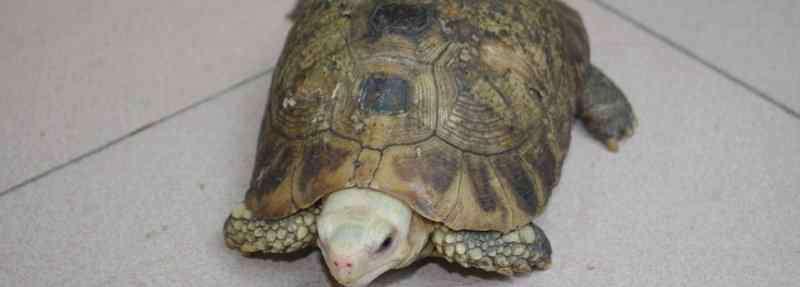 乌龟白眼病用什么药 乌龟白眼病用什么药