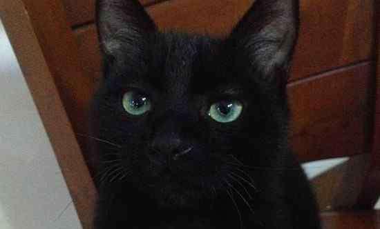 养猫会带来什么运气 养猫会带来什么运气,家里养猫对财运会很好