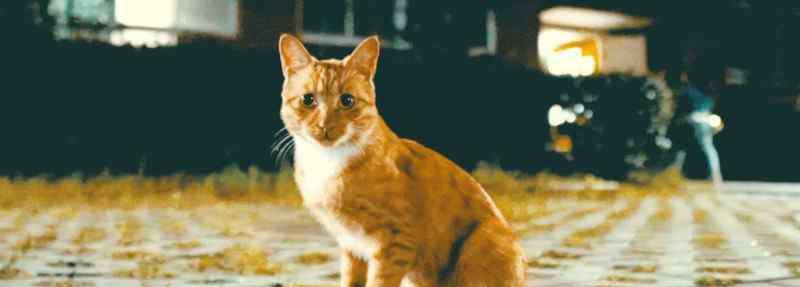 猫咪衣服的做法图解 猫衣服教程