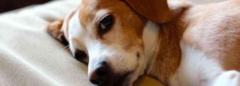 狗狗能吃的东西清单 狗狗不能吃的东西