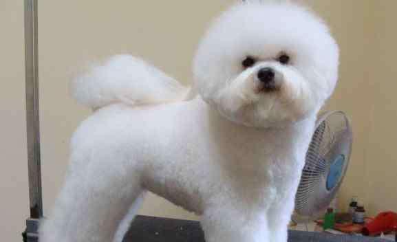 江直树家的狗 十二星座适合养什么狗