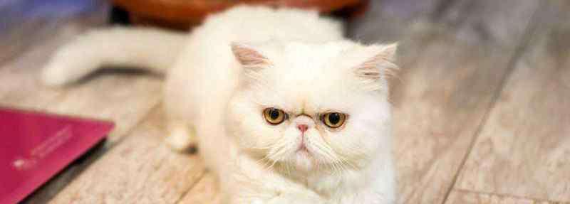 加菲猫去泪痕小窍门 加菲猫去泪痕小窍门