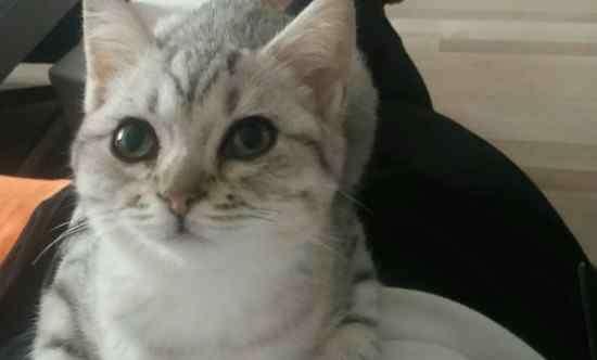 小猫鼻子不通气小妙招 猫咪鼻子不通气怎么办,解决猫鼻子不通气小妙招