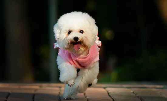 什么狗最可爱 什么狗最可爱最萌,这5种宠物狗可爱又聪明很适合家养