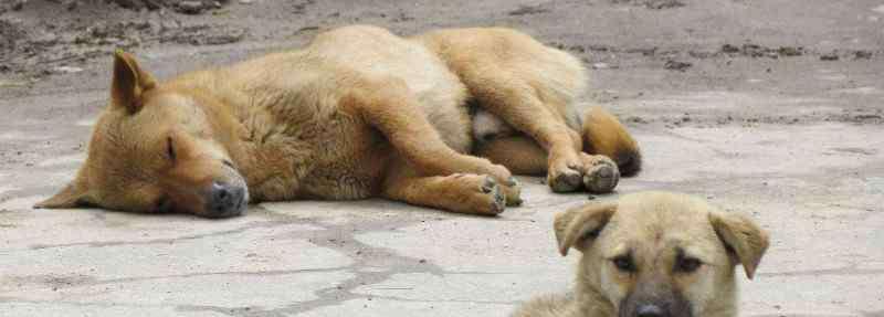 狗几个月下崽 狗几个月下崽