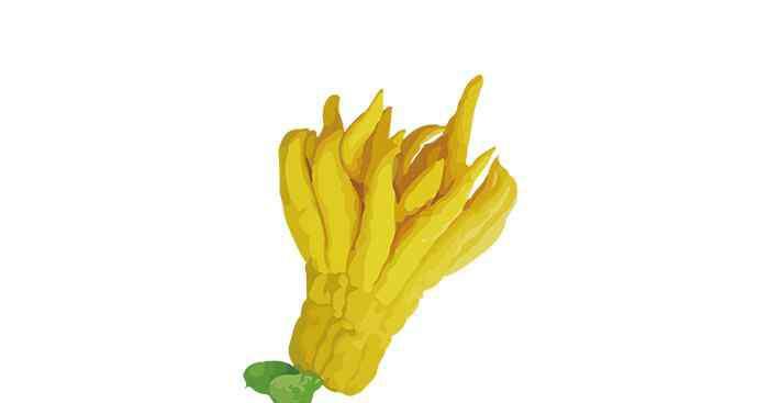 佛手怎么吃 新鲜的佛手柑怎么吃 新鲜的佛手柑的吃法