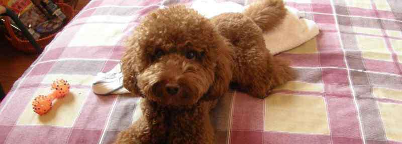 可爱狗狗品种 可爱的狗狗品种