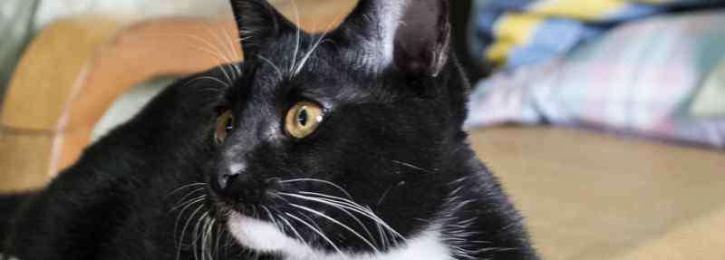 猫咪宠物店 猫舍和宠物店区别