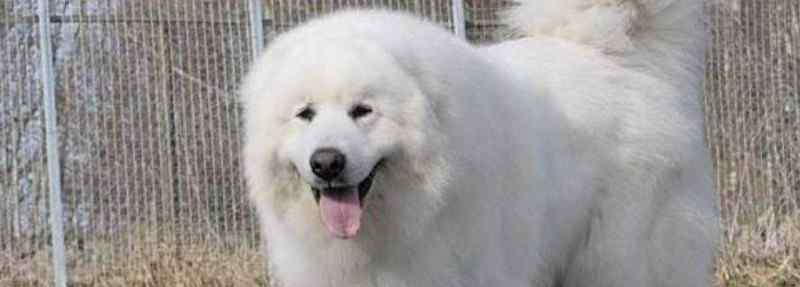 大白熊好养吗 大白熊好养吗