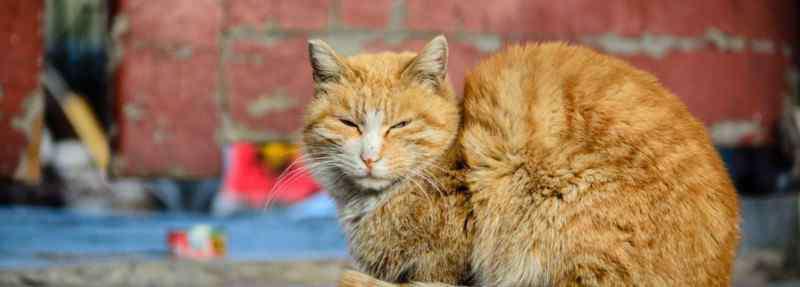 猫传染病 流浪猫有什么传染病