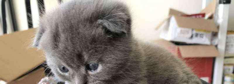 小猫出生多久可以碰 小猫出生多久可以碰