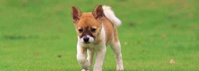 狗狗长期吃鸡胸肉好吗 狗狗能吃鸡胸肉吗
