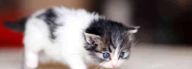 猫咪可以吃蛋黄吗 幼猫能吃蛋黄吗