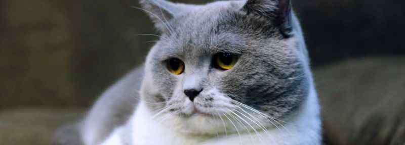 猫身上有凸起的小肉粒 猫身上有凸起的小肉粒