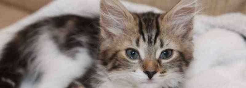 猫吃什么食物 小猫吃什么食物