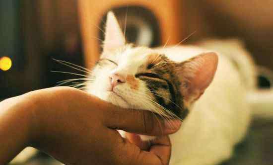 猫咪对主人有感情吗 猫咪对主人会有感情吗,猫咪知道主人对它好吗